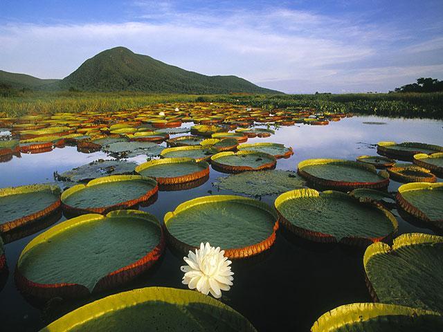 pousada piuval pantanal mato grosso 3