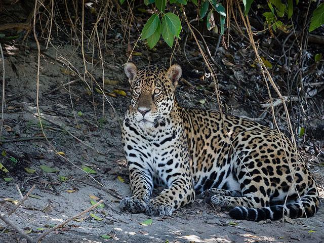pousada piuval pantanal mato grosso 4