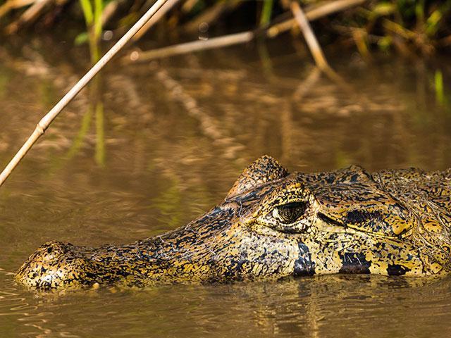 pousada piuval pantanal mato grosso 6